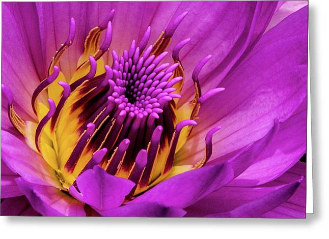 Greeting Card featuring the photograph Exotic Hot Pink Water Lily Macro by Julie Palencia
