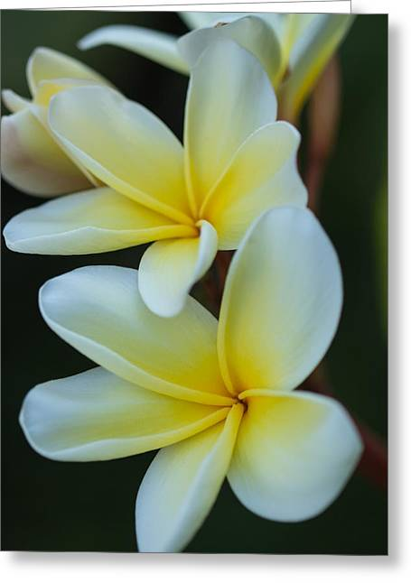 Greeting Card featuring the photograph Exotic by Julie Andel