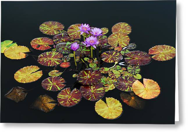 Exotic Lilies Greeting Card by Kurt Shaffer