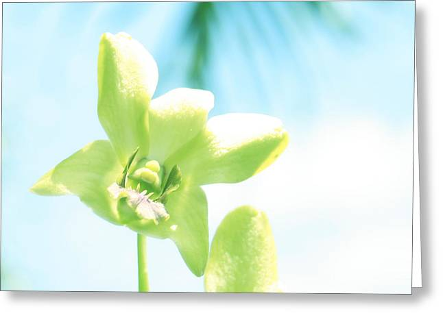 Exotic Orchid Beauty Greeting Card by Georgia Fowler