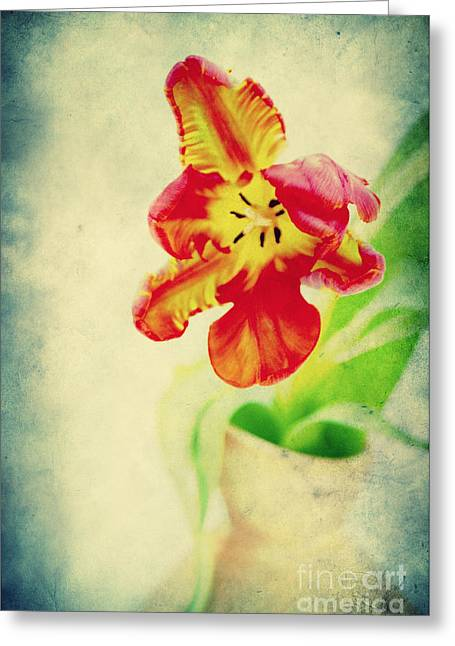 Exotic Tulip Greeting Card by Angela Doelling AD DESIGN Photo and PhotoArt