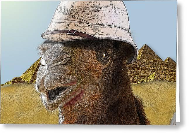 Expeditionary Camel At Giza Greeting Card
