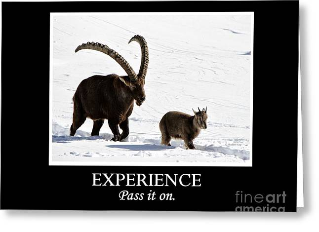 Experience Greeting Card