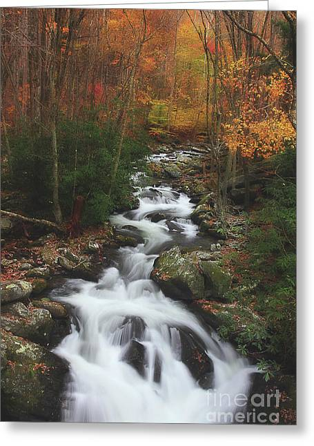 Exploring Autumn Greeting Card by Michael Eingle