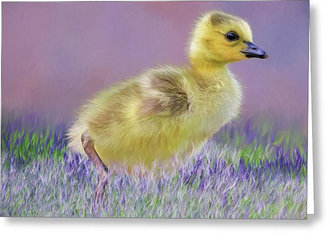 Exploring Spring Greeting Card by Donna Kennedy