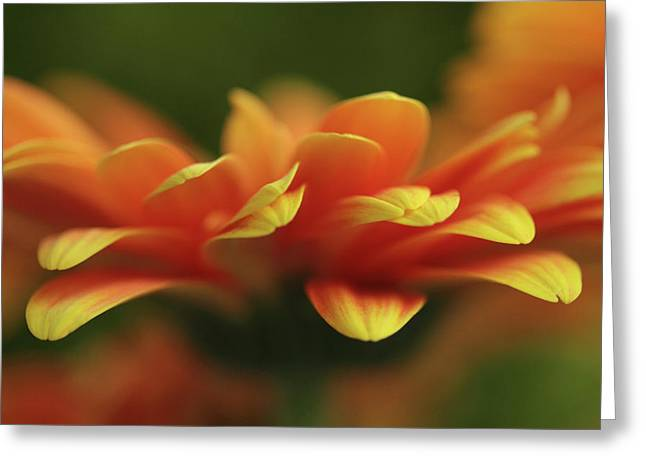 Explosion  Greeting Card by Connie Handscomb