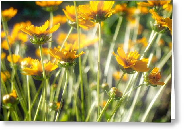 Greeting Card featuring the photograph Explosion Of Yellow by Michael Colgate