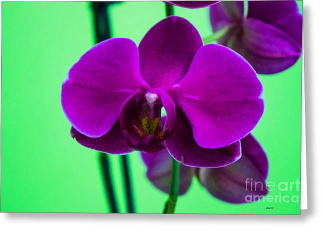 Exposed Orchid Greeting Card
