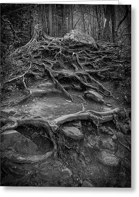 Greeting Card featuring the photograph Exposed Roots by Alan Raasch