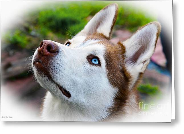 Expressive Siberian  Husky Photo C62017 Greeting Card