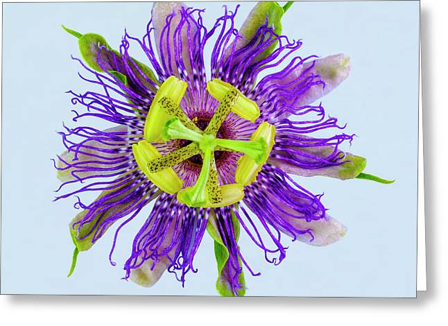Expressive Yellow Green And Violet Passion Flower 50674b Greeting Card