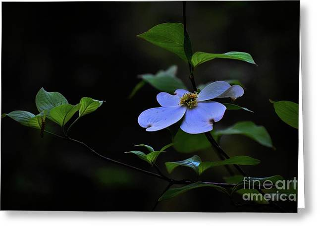 Greeting Card featuring the photograph Exquisite Light by Skip Willits