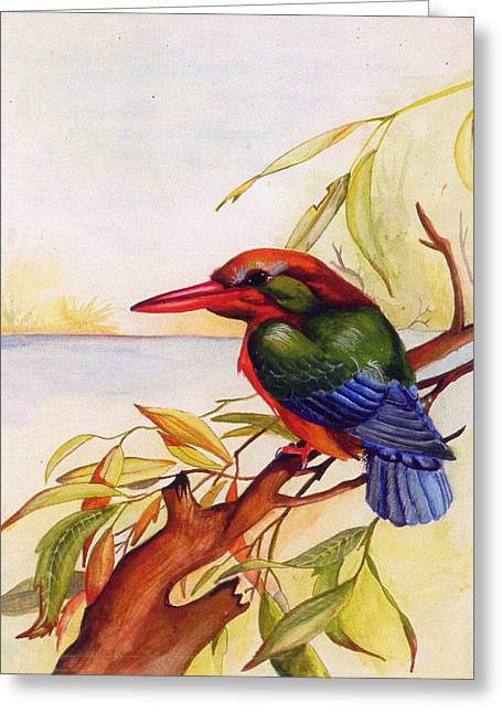 Extinct Birds The Kingfisher Greeting Card