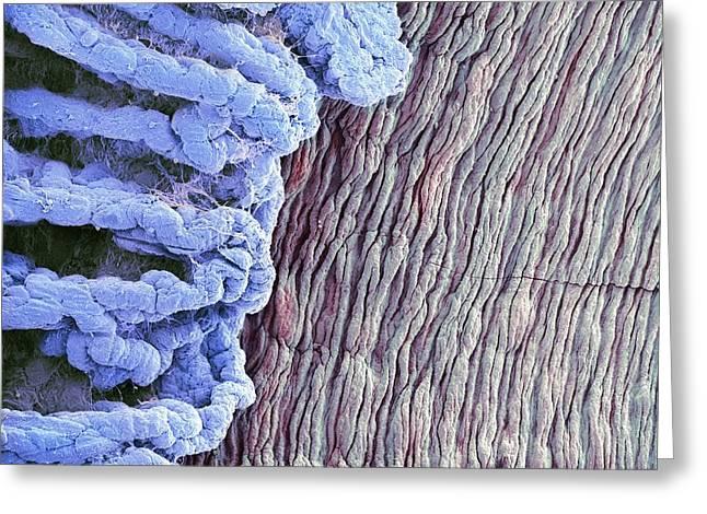 Eye Anatomy, Sem Greeting Card by Steve Gschmeissner