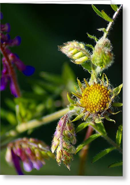 Eye Candy From The Garden Greeting Card