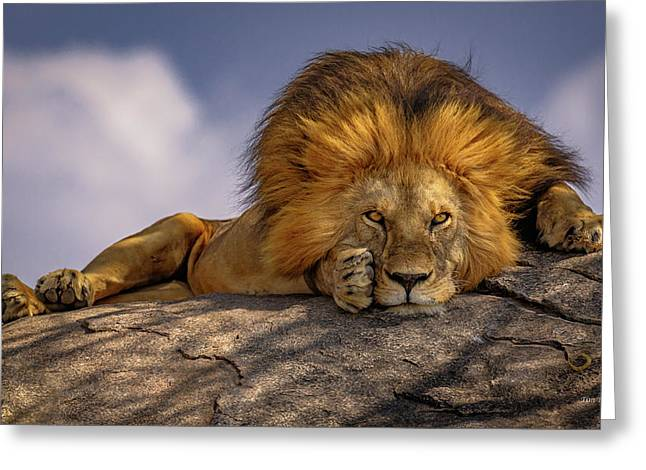 Eye Contact On The Serengeti Greeting Card