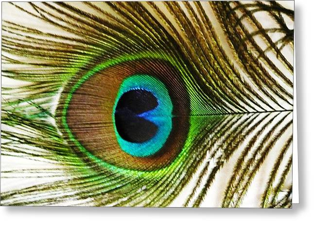 Eye Of Peacock Greeting Card