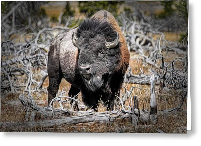 Eye Of The Buffalo Greeting Card by Donna Kennedy