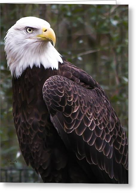 Eye Of The Eagle Greeting Card by Trish Tritz