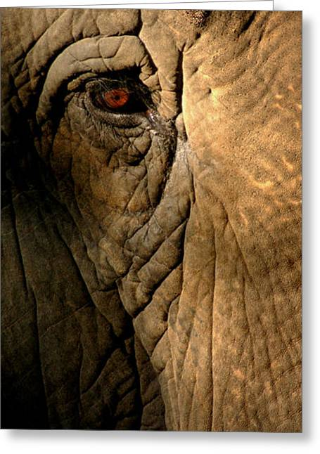 Eye Of The Elephant Greeting Card