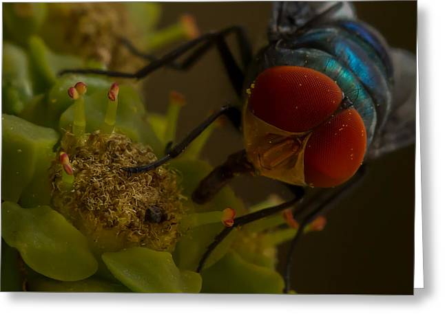 Eye Of The Fly - Macro Greeting Card by Ramabhadran Thirupattur