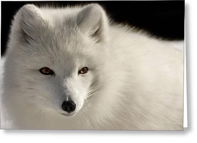 Eye Of The Fox Greeting Card