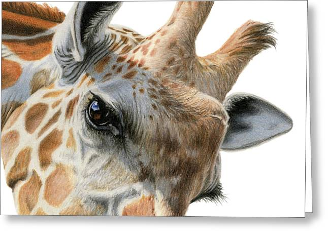 Eye Of The Giraffe Greeting Card
