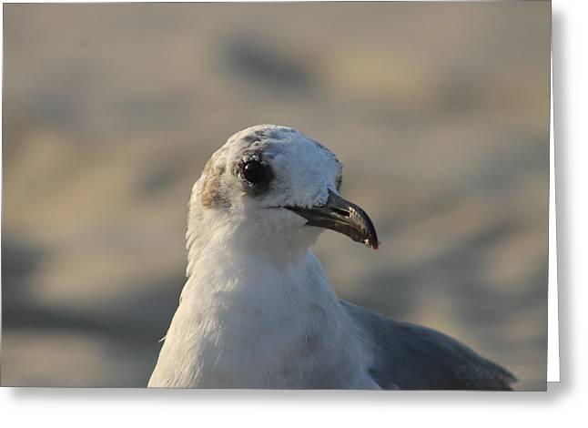Eye Of The Gull Greeting Card