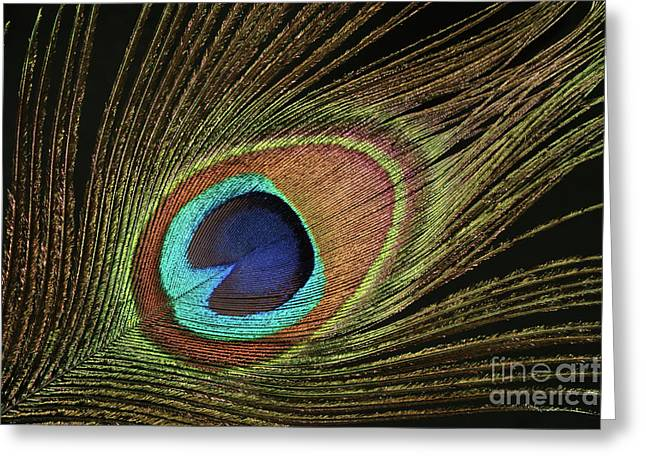 Eye Of The Peacock #11 Greeting Card