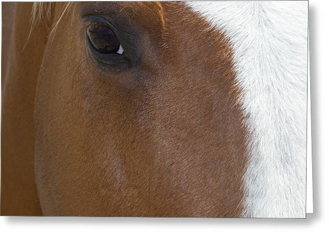 Eye On You Horse Greeting Card
