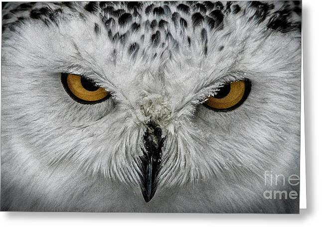 Greeting Card featuring the photograph Eye-to-eye by Brad Allen Fine Art