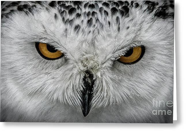 Eye-to-eye Greeting Card by Brad Allen Fine Art
