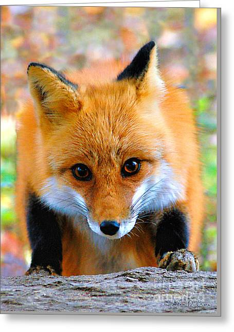 Eye To Eye II Greeting Card by Adam Olsen