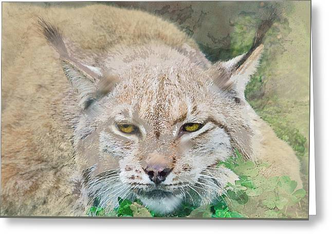 Eye To Eye With A Lynx In The Grass Greeting Card