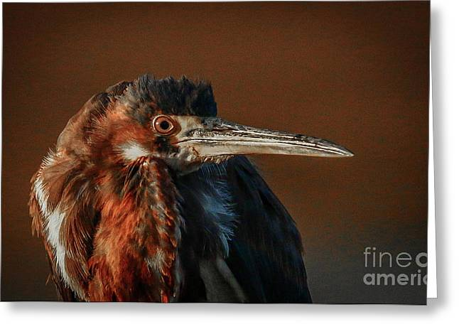 Greeting Card featuring the photograph Eye To Eye With Heron by Tom Claud