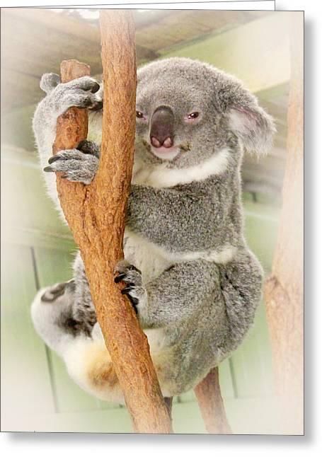Eye To Eye With Mr. Koala Greeting Card by Susan Vineyard