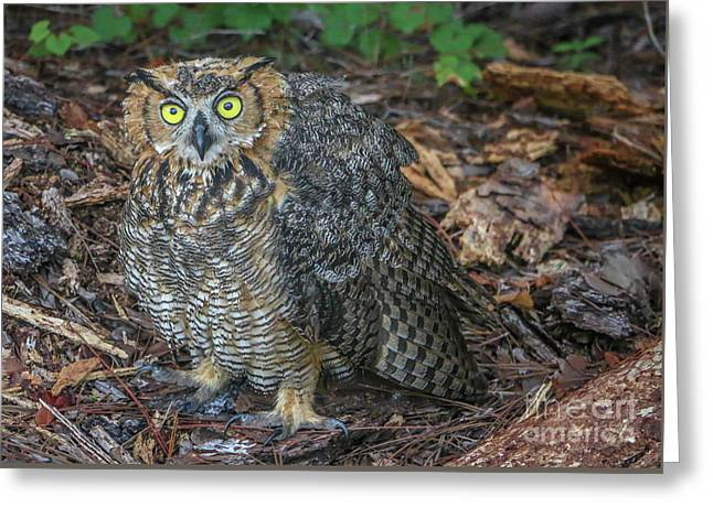 Eye To Eye With Owl Greeting Card