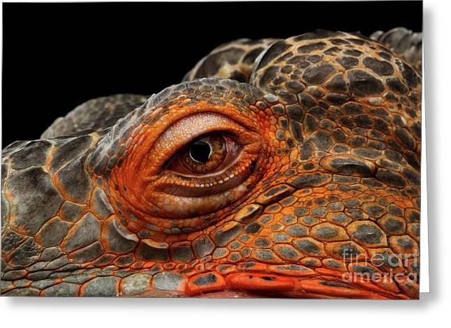Eyeball Of Dragon Head Greeting Card