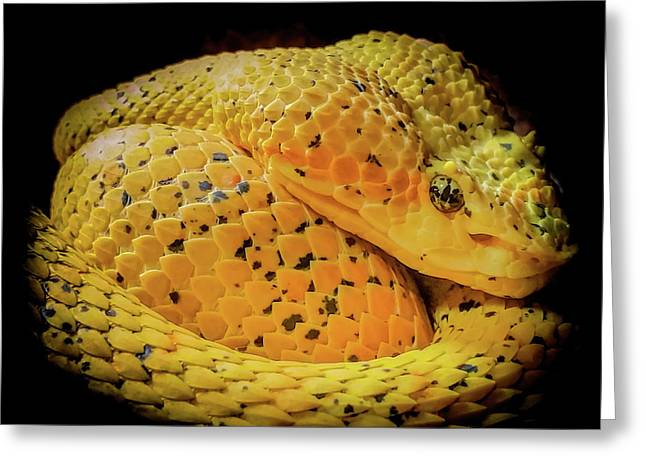Greeting Card featuring the photograph Eyelash Viper by Karen Wiles