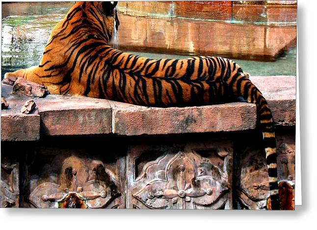 Oriental Tiger Greeting Cards - Eyes Behind Your Head Greeting Card by Paula Hammond