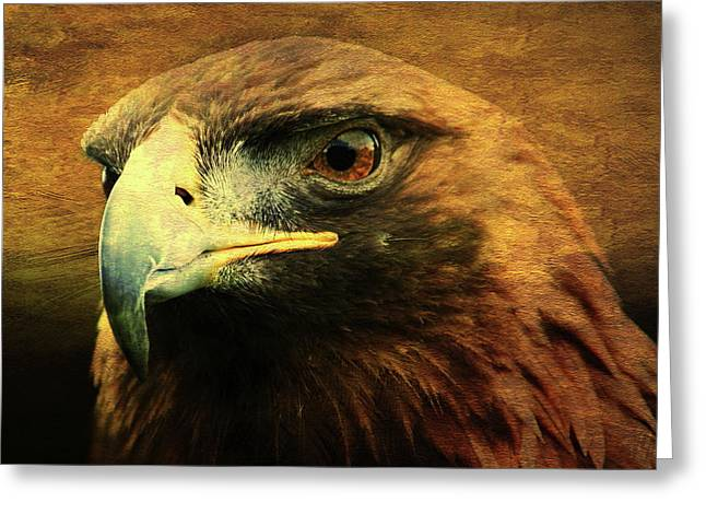 Eyes Of The Golden Hawk . Square Greeting Card by Wingsdomain Art and Photography