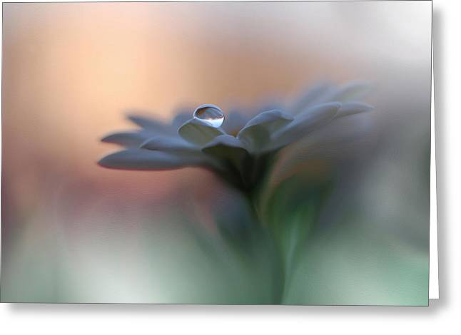 Eyes Of The Light Greeting Card by Juliana Nan