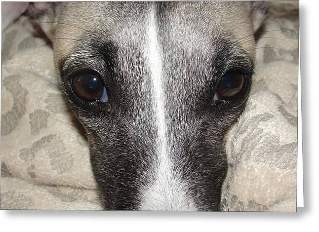 Eyes Whippet Greeting Card by Marie-france Quesnel