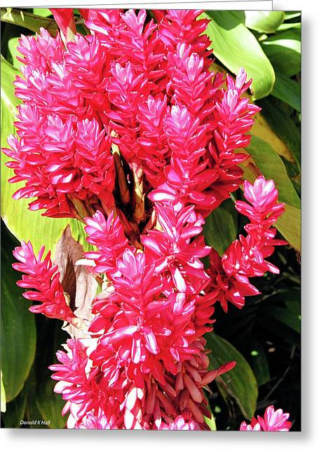 F10 Red Ginger Greeting Card by Donald k Hall