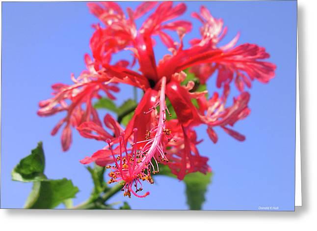 F18 Hawaiian Hibiscus Greeting Card by Donald k Hall