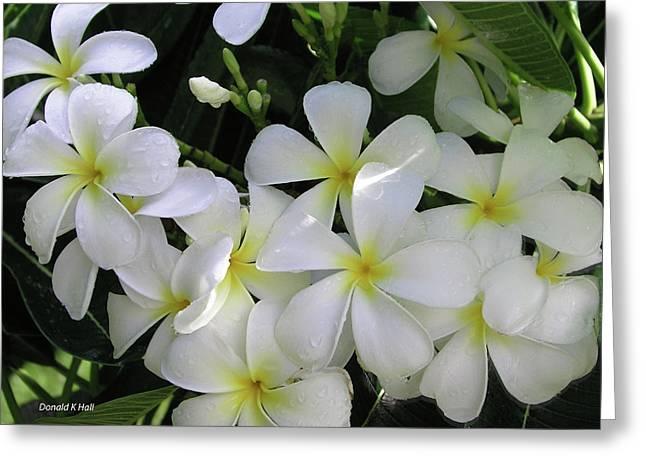 F2 Plumeria Frangipani Flowers Hawaii Greeting Card by Donald k Hall