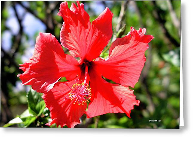 F20 Red Hibiscus Greeting Card by Donald k Hall