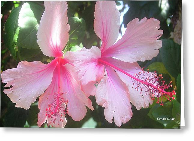F4 Hibiscus Flowers Hawaii Greeting Card by Donald k Hall