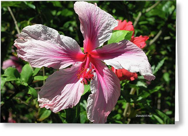 F5 Hibiscus Flower Hawaii Greeting Card by Donald k Hall