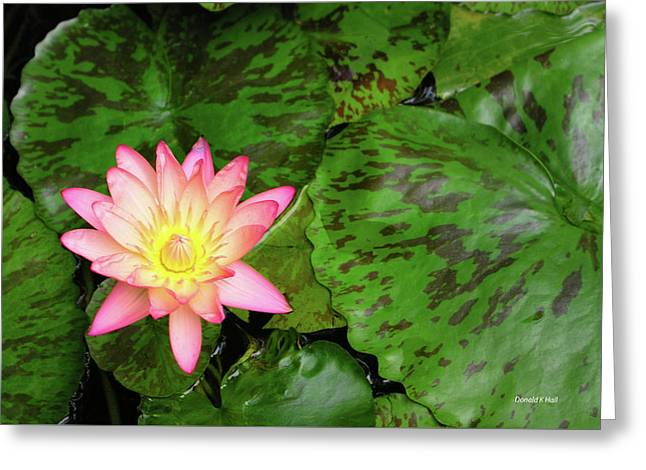 F6 Water Lily Greeting Card by Donald k Hall